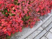 施工事例 芝・植栽・シンボルツリーのイメージ画像